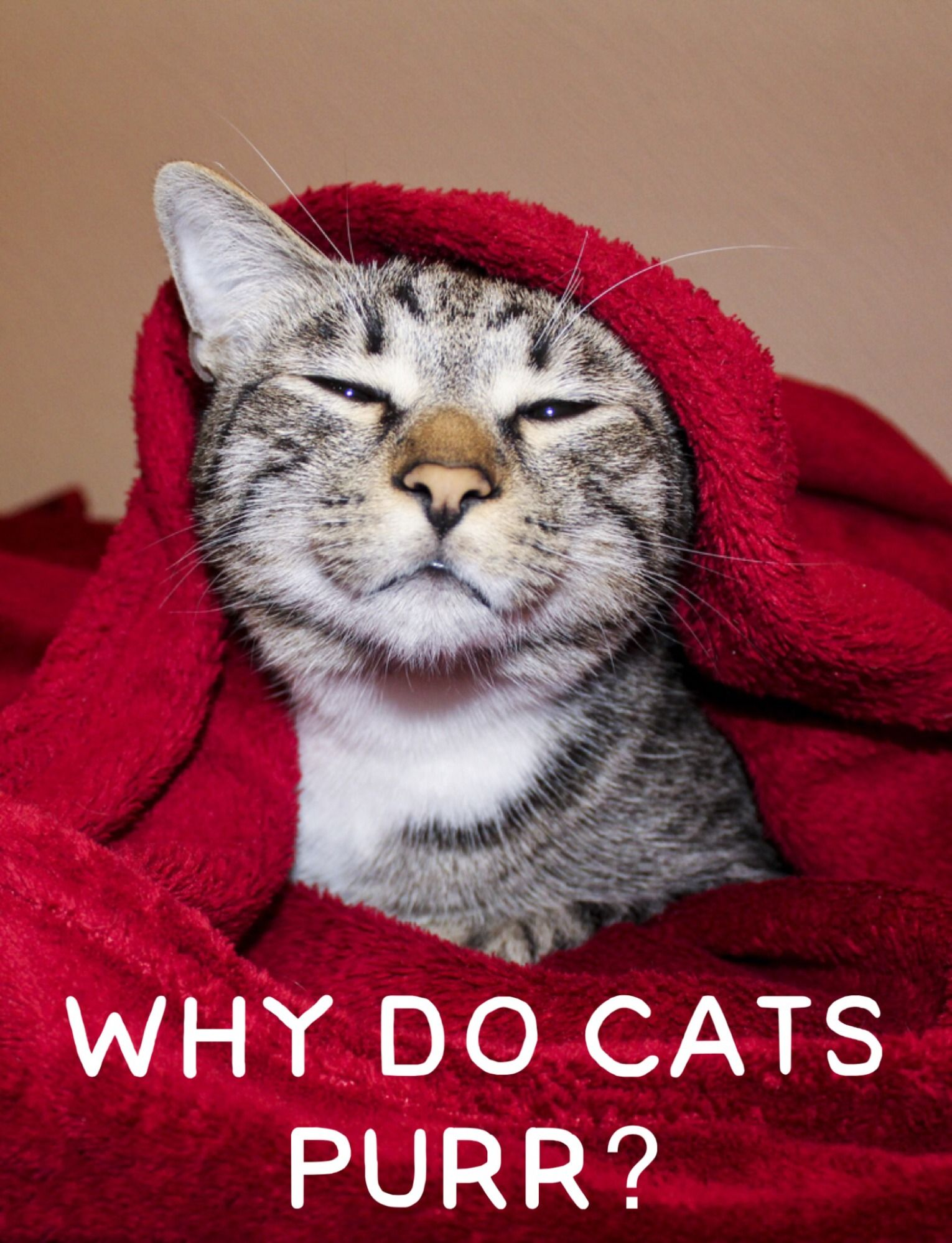 Why do cats purr And 6 other mon cat questions Answered by