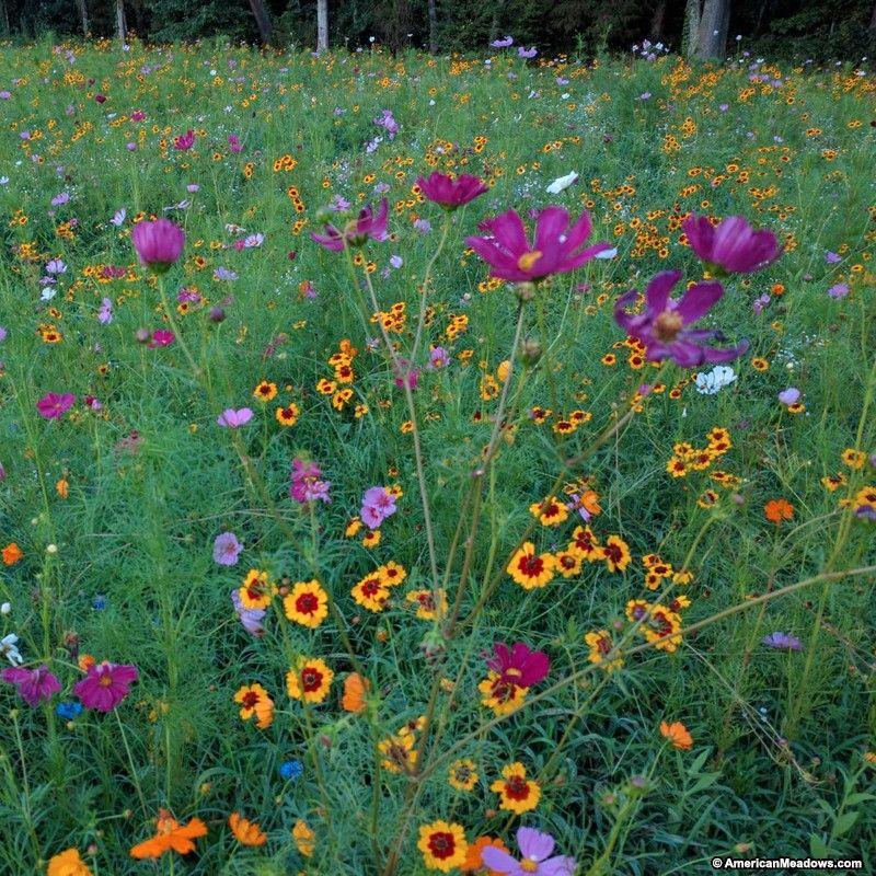 Southeast Pollinator Wildflower Seed Mix Wildflower