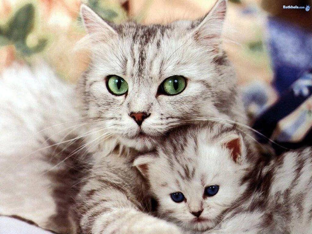 funny cats videos - part 102