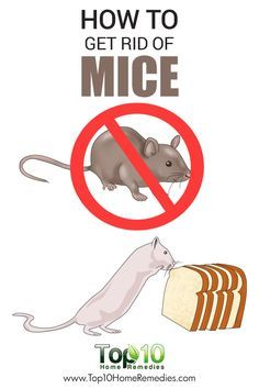 How To Get Rid Of Harvest Mites On Cats