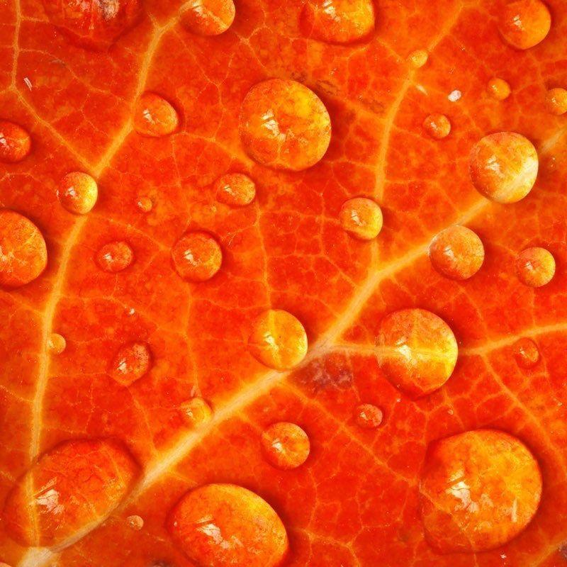 Orange Ipad Wallpaper 23 Orange Aesthetic Orange Wallpaper Aesthetic Orange Color orange wallpaper hd