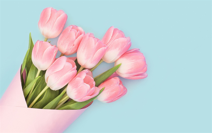 fdac20eb169b9 Download wallpapers pink tulips, spring flowers, spring, bouquet of tulips