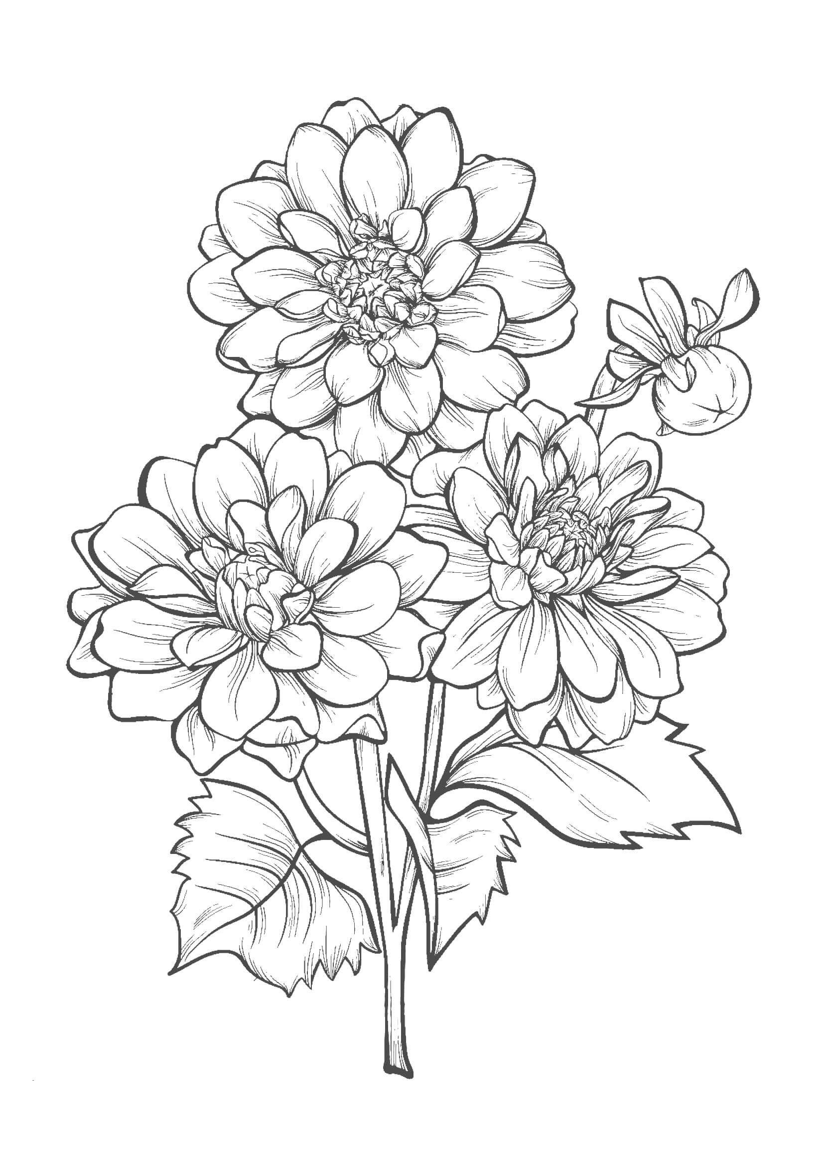 花04 A4無料印刷の大人のぬりえ 切り絵 Flower Line Drawings