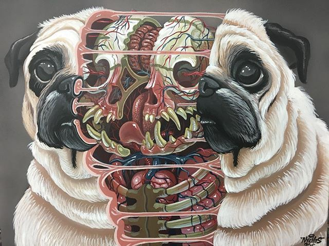 Dissection Of A Pug Squeaky Painting Canvas Nychos Anatomy