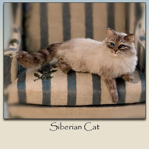 Elizabeth McInnis - Himilayan - miniature cat Olishan tämä hieno lisäys nukkekodin kissakatraaseen