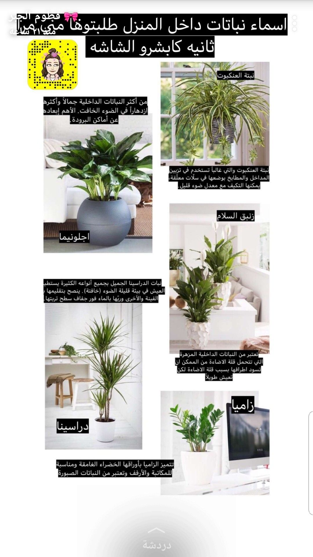 Pin By Sumaya Thani Ali Alkhaifi On House Plants House Plants Decor Plant Decor Country Garden Decor