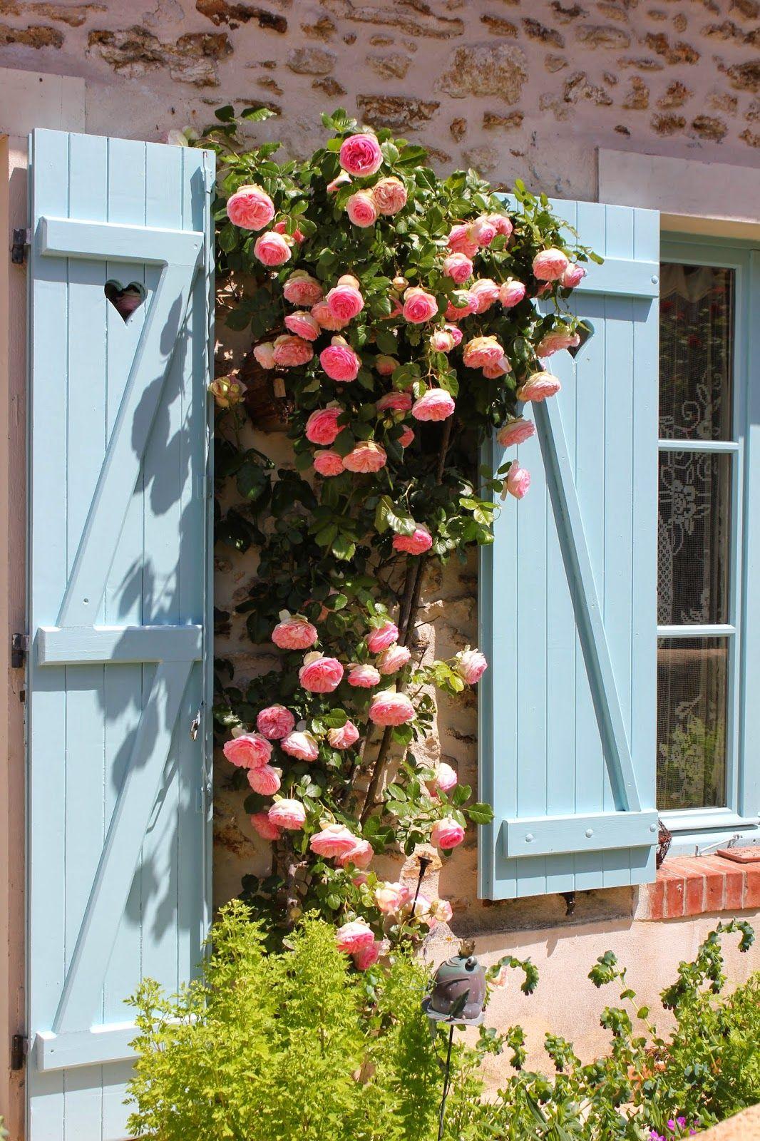 Pierre de Ronsard roses climbing a home's stone wall