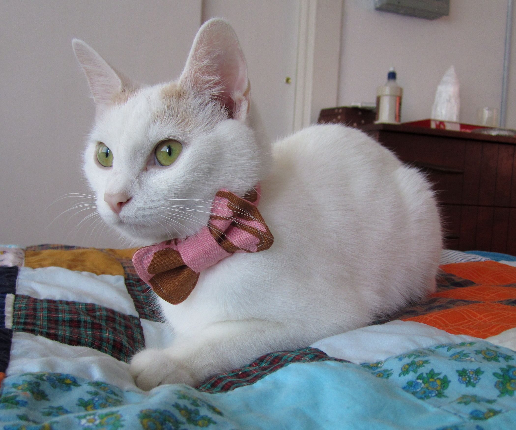 Cat bow tie pattern sewing pinterest cat bow tie bow tie it definitely woof it to take a look at these easy projects and find the purrfect fit for your animal family most of these do it yourself ideas require solutioingenieria Gallery
