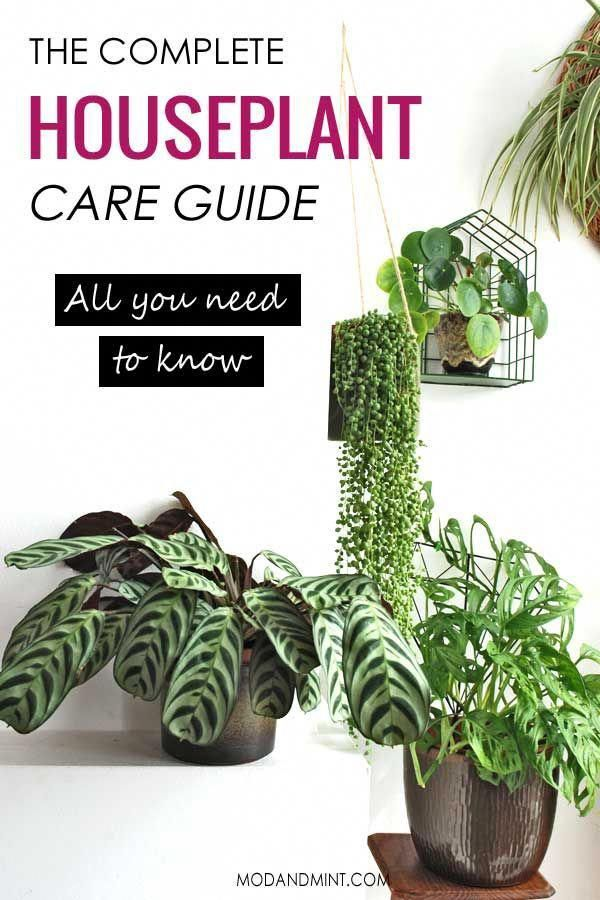 Do you know how to care for your houseplants Heres all you need to know in one place Things like when to water or how to repot your plants What type of light should they...