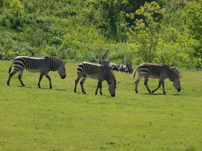 The Beautiful Wonders Of The African Savanna Unique