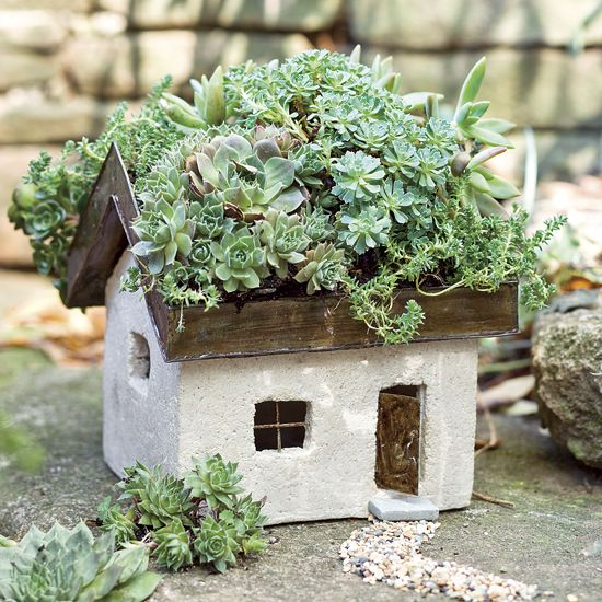 100 Succulent Garden Ideas for Uniqueness and Intr