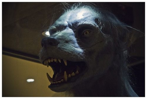 Monsters Werewolves Werewolf Werewolf Costume Harry Potter Aesthetic
