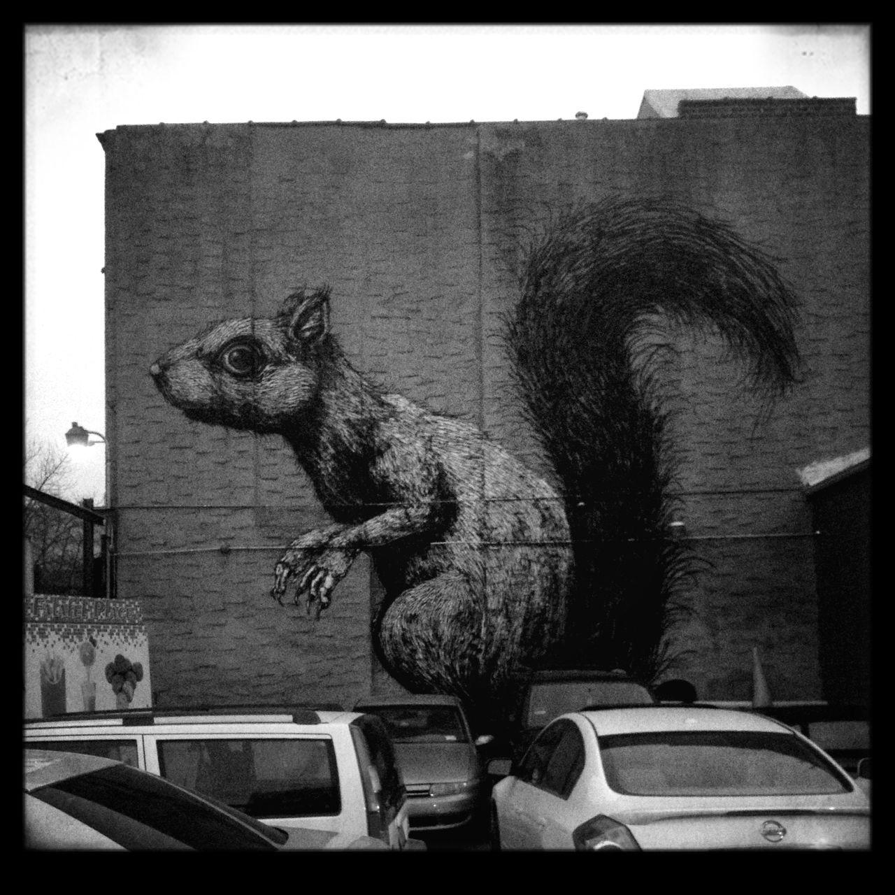 Brooklyn new york street art squirrel nuts squirrels
