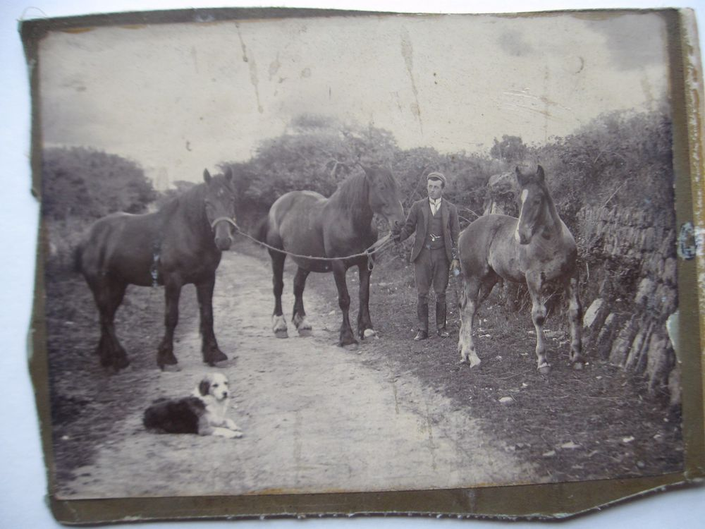 LARGE ANTIQUE PHOTO - MAN HORSES DOG ON OLD COUNTRY ROAD circa 1890 s