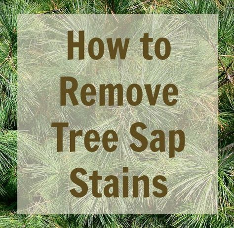 How To Remove Tree Sap Stains From Carpet Clothing Walls