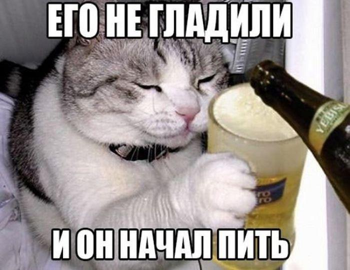 Его не гладили и он начал пить #кот #бухло #пиво | Кот ...
