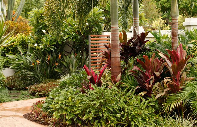 Tropical garden designs queensland pdf spectangular for Tropical garden designs