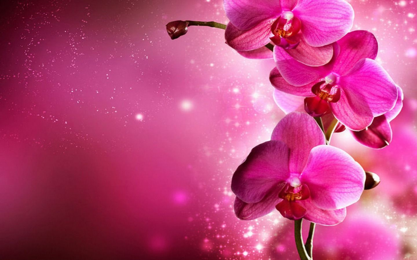 pink floral |  flowers pink wallpaper hd wallpaper - orchid