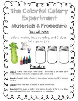 image relating to Celery Experiment Printable Worksheet titled Its Science Season! Osmosis: The Vibrant Celery Experiment