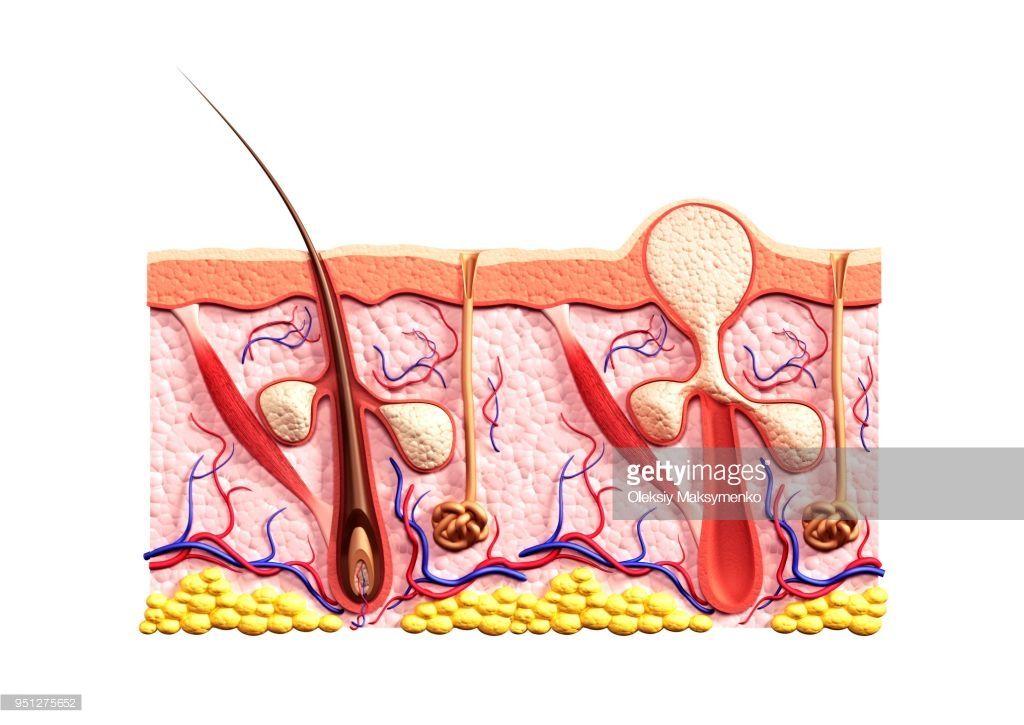 Image Result For Pimple Illustration