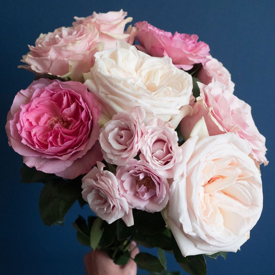 Roses In Garden: Pretty Pink Rose Varieties: Pink Mondial, White O'hara