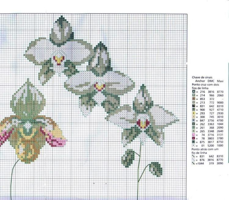 Gallery.ru / Фото #10 - Орхидеи - mornela