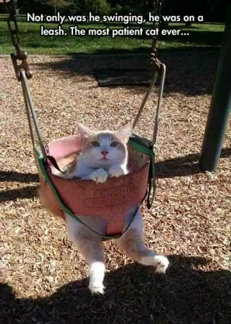 Top 26 Hilarious Animal Memes Clean Enough For Kids Funny Animal Pictures Funny Animals Animal Memes Clean