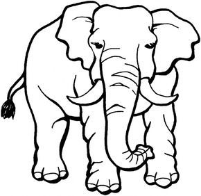 Jungle Animals Coloring Pages Designs Elephant Coloring Page