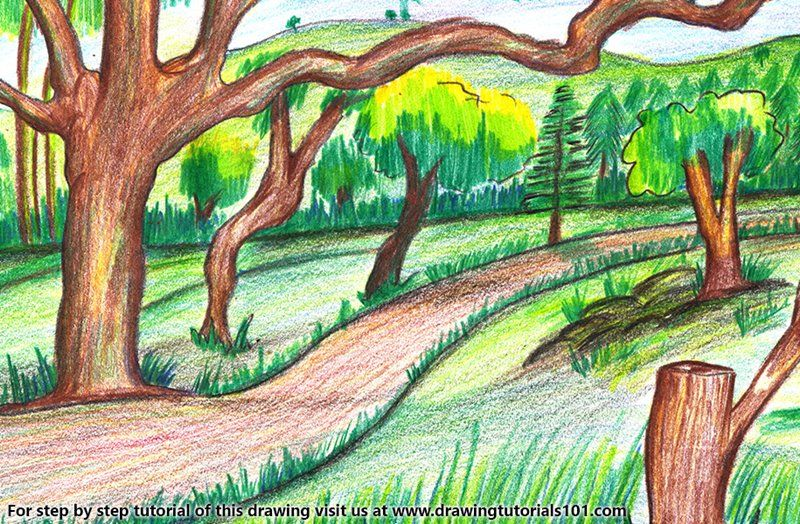 Forest Scenery Colored Pencils Drawing Forest Scenery With
