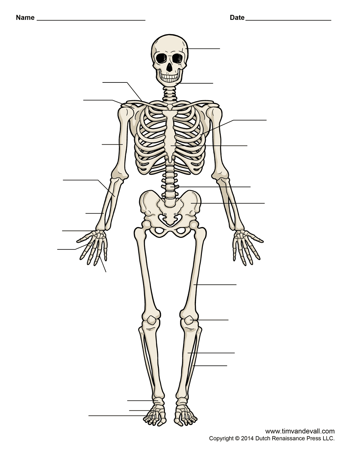 human-skeleton-chart.png (1159×1500) | Body systems | Pinterest