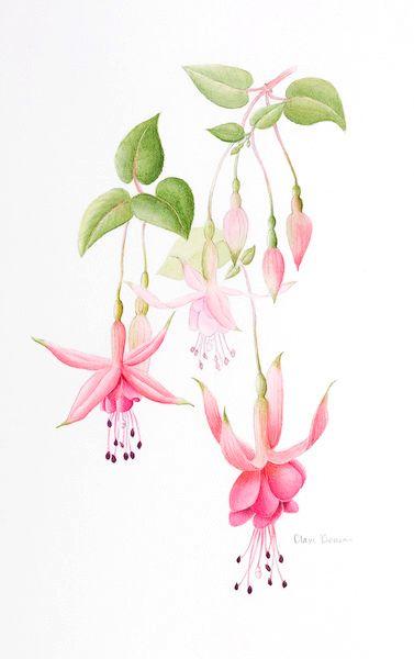Clare Benson Flower Art Flower Drawing Flower Painting