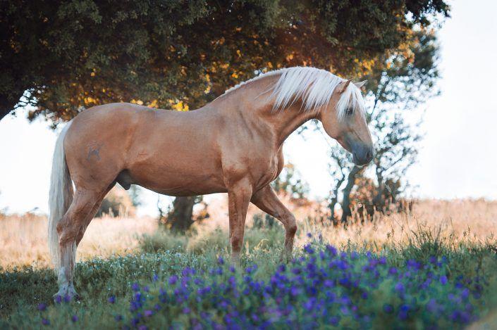 Fotos Pferde In Der Natur I Pferde Fotografie Pferdefotografie