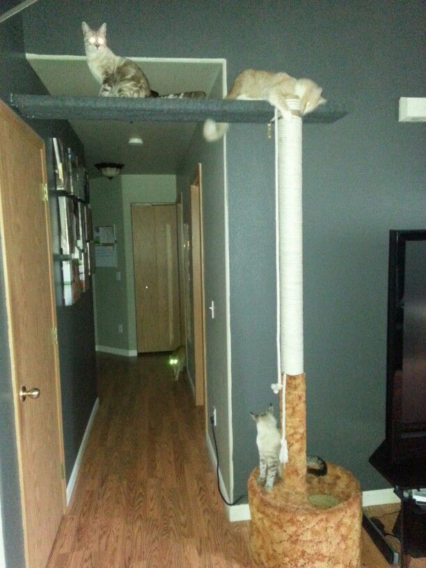 DIY cat pole