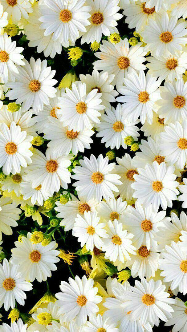Pin by Qgiang on fleurs ورد flower Sunflower wallpaper