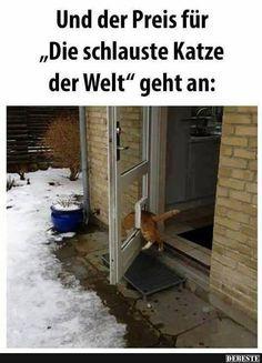 Die schlauste Katze der Welt | DEBESTE.de, Lustige Bilder, Sprüche, Witze und Videos