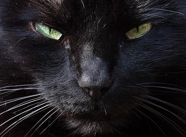 Black cat  Molly  still doesn't like my camera ...