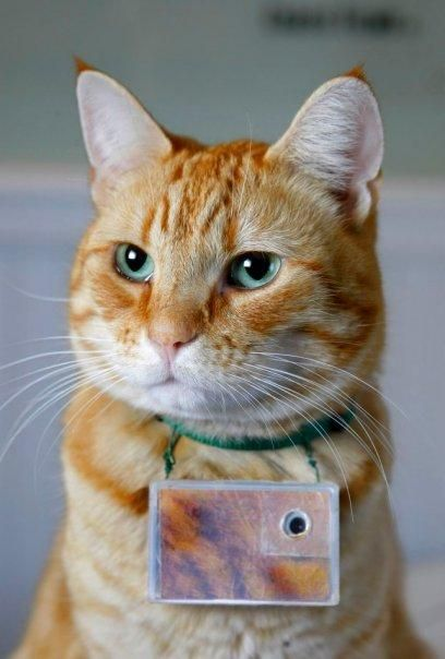 Cat Photographer Takes Facebook Seattle Art World By Storm
