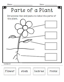 parts of a plant cut and paste activity science parts of a plant plants teaching plants. Black Bedroom Furniture Sets. Home Design Ideas