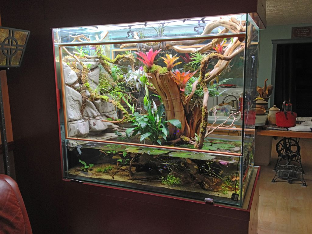 Other Tank 1 Photo By Fullmontitog Photobucket Reptile Tank Orchid Mantis Formicarium