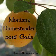 Montana Homesteader 2016 Goals - Montana Homesteader