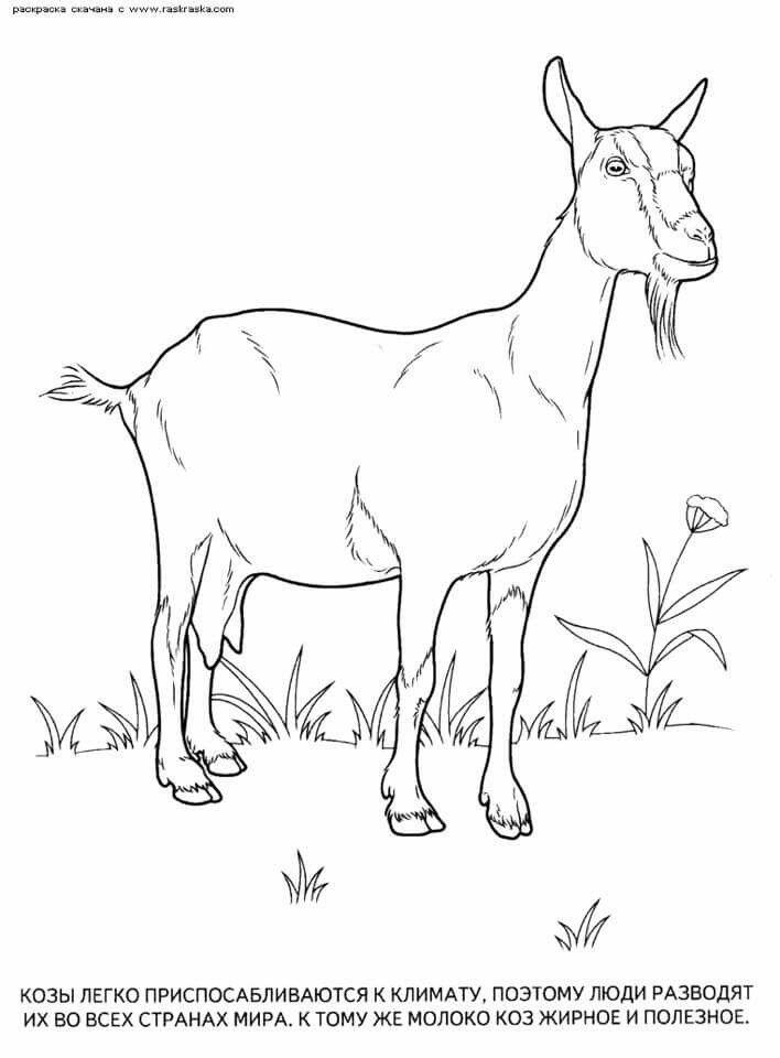 Pin By Margita Kmetkova On Domace Zvierata Goat Art Animal Coloring Pages Animals