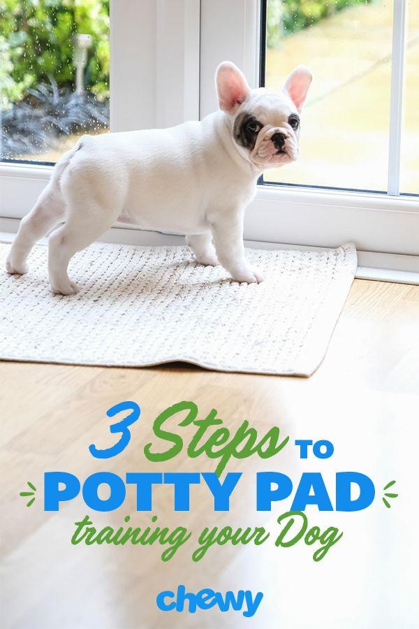 Senior Dog Puppy Training Potty Pad Training Basics Pet Potty