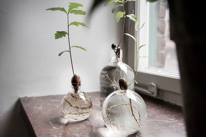 grow your own acorn into an oak odla ekollon i vas glas ekollonvas marmor f nsterbr da my. Black Bedroom Furniture Sets. Home Design Ideas