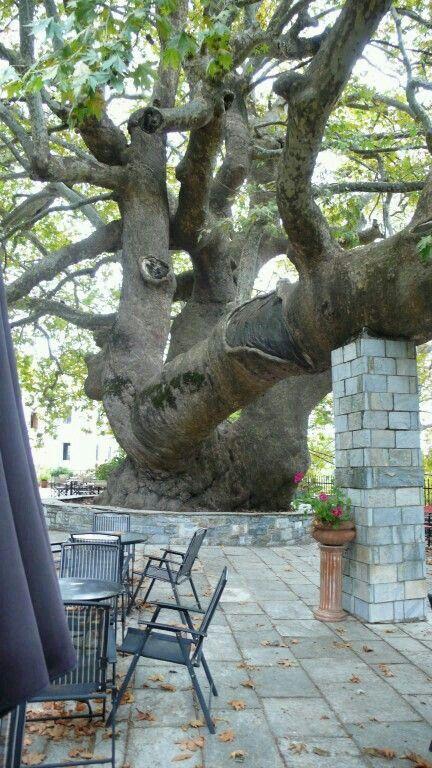 Trees ❤️ LIKE BY DIAiSM ACQUIRE UNDERSTANDING ATTAISM TJANN TjAnn ATELIER DIA TJANNTEK ART SPACE atElIEr dIA
