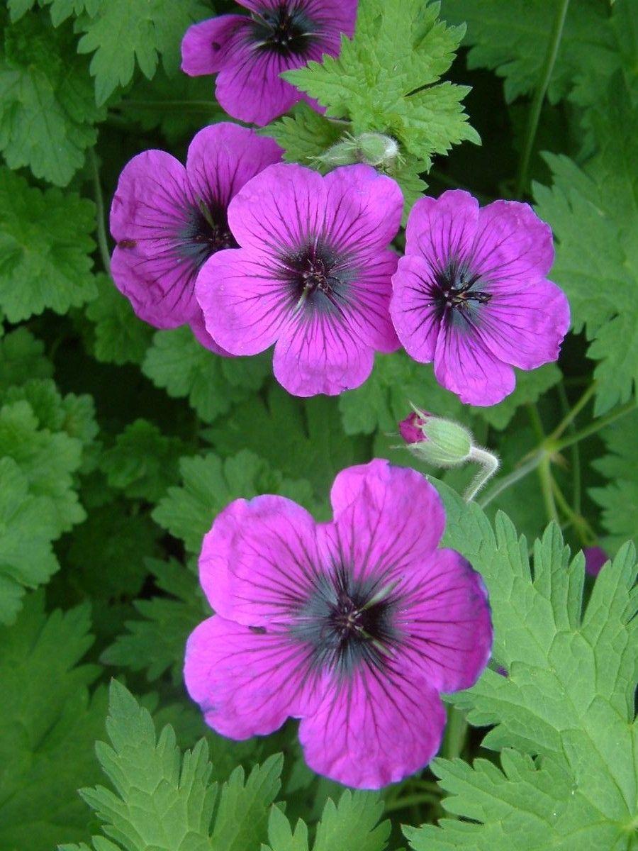 Pin by M fereshteh on Beautiful Flowers Beautiful