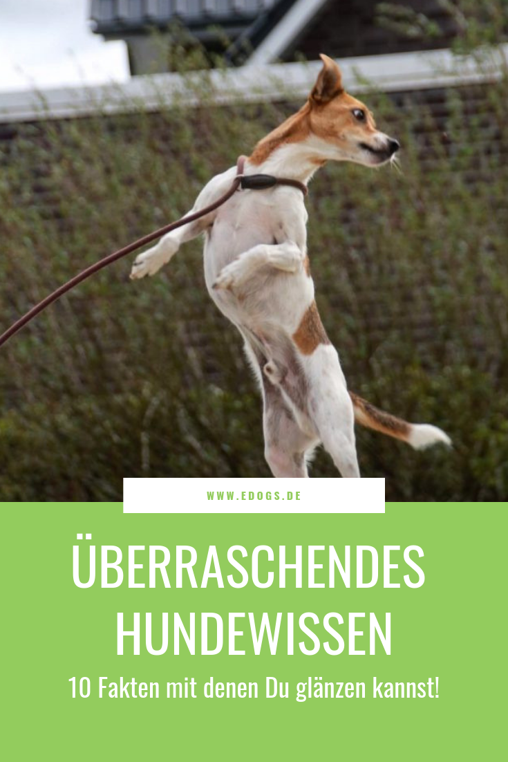 Hundewissen 10 Fakten Uber Hunde Hunde Teuerster Hund Der Welt Teure Hunde