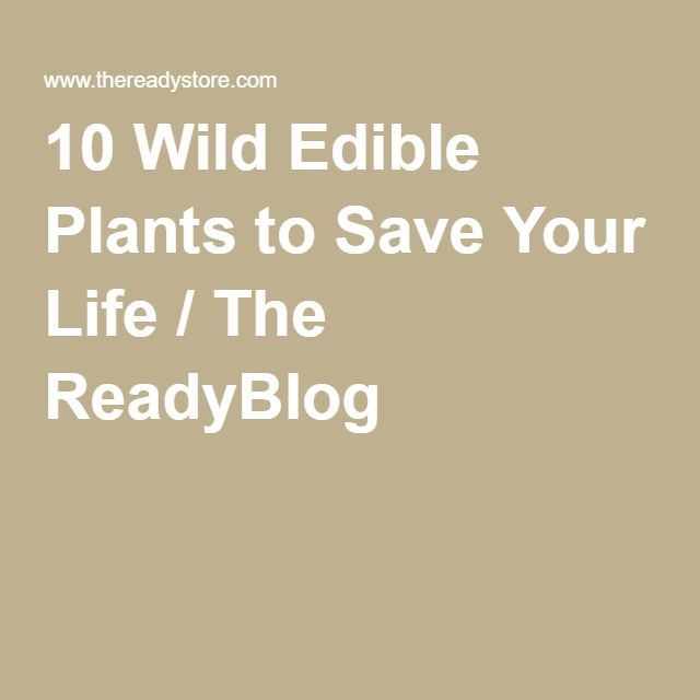 10 Wild Edible Plants to Save Your Life / The ReadyBlog