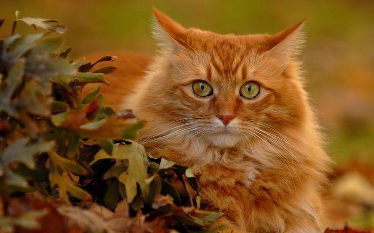 Toutes Les Couleurs De L Automne Rode Kat Katten Foto