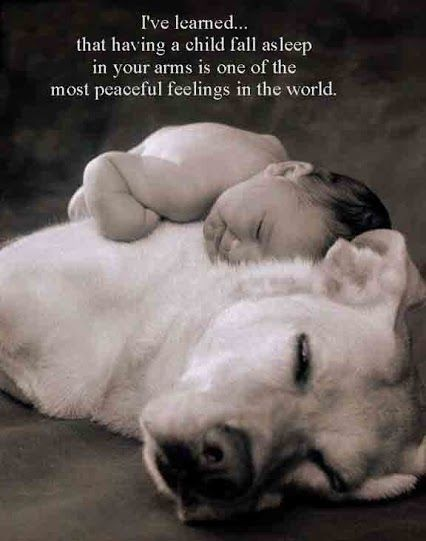 Having A Child Fall Asleep In Your Arms Quotes Quote Baby Dog