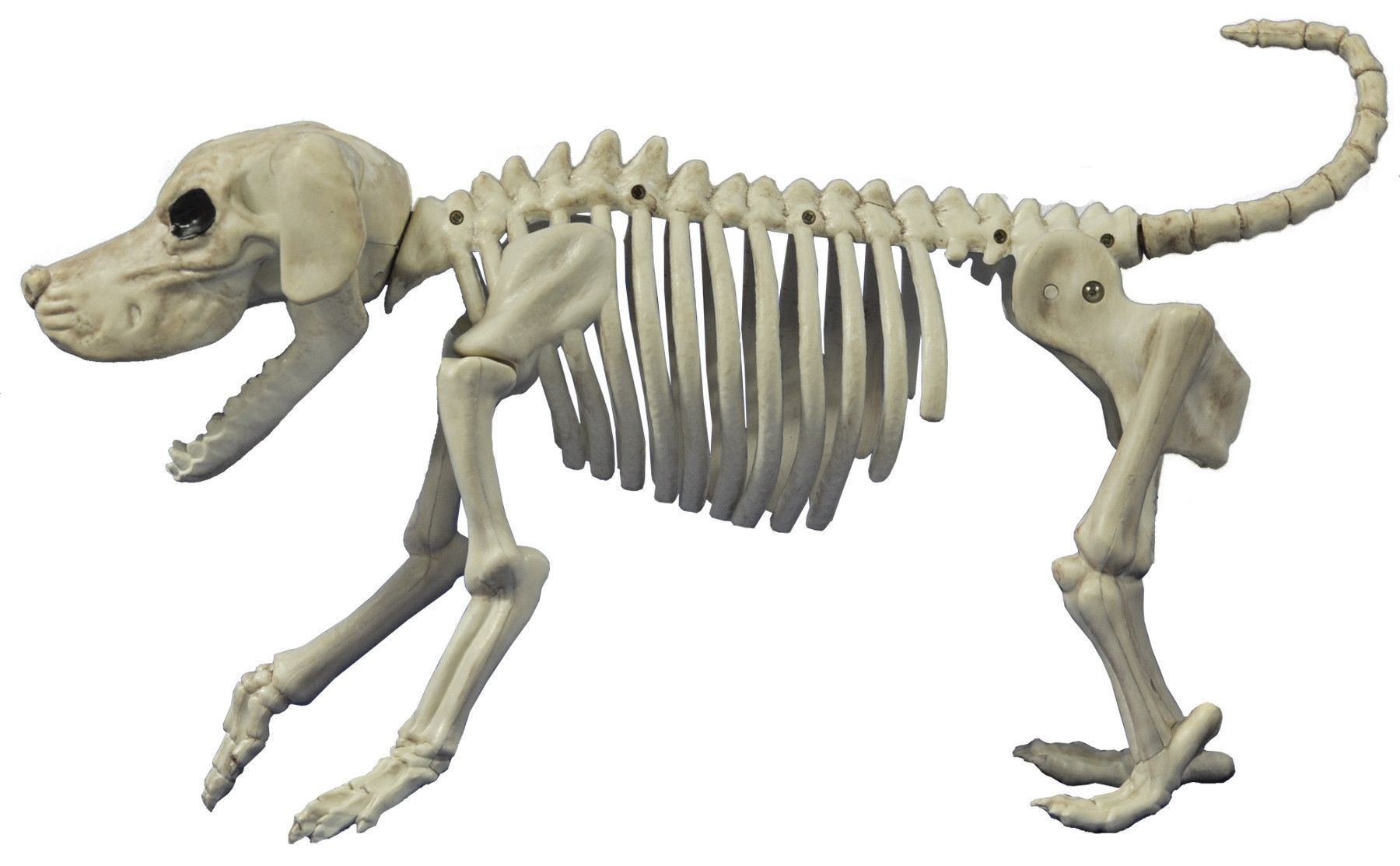 Beagle Bones Skeleton Dog Dog Skeleton Dog Skeleton Halloween Halloween Skeleton Decorations